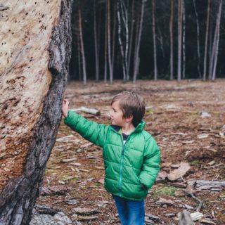 Šumski vrtić