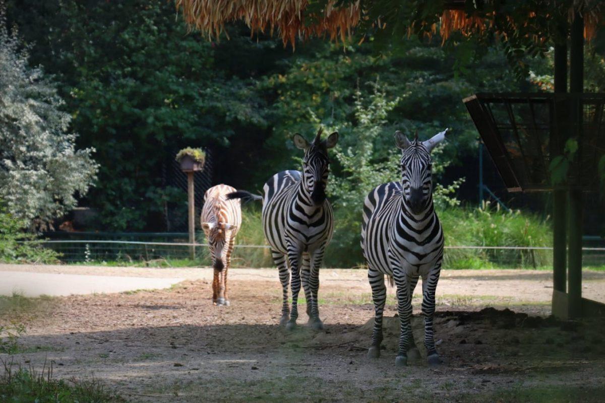 Valentinovo u Zoološkom vrtu grada Zagreba: Ljubav u zraku, na tlu i u vodi