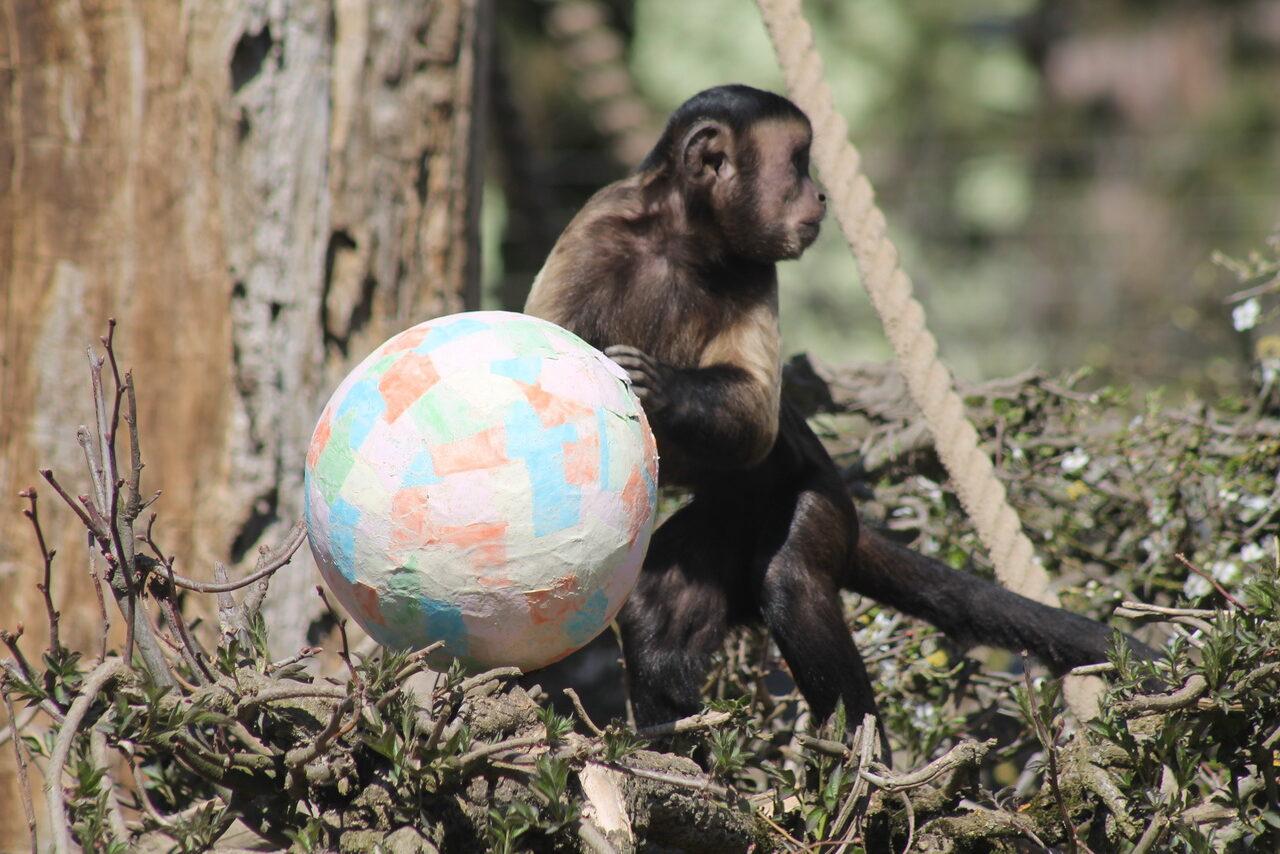 Zekanje u Zoo vrtu